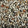 Micro Snails V2