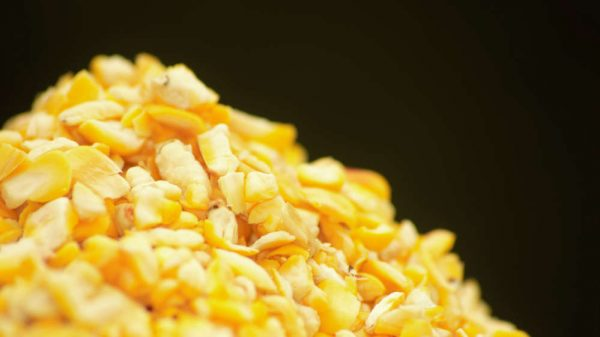 Cut Maize